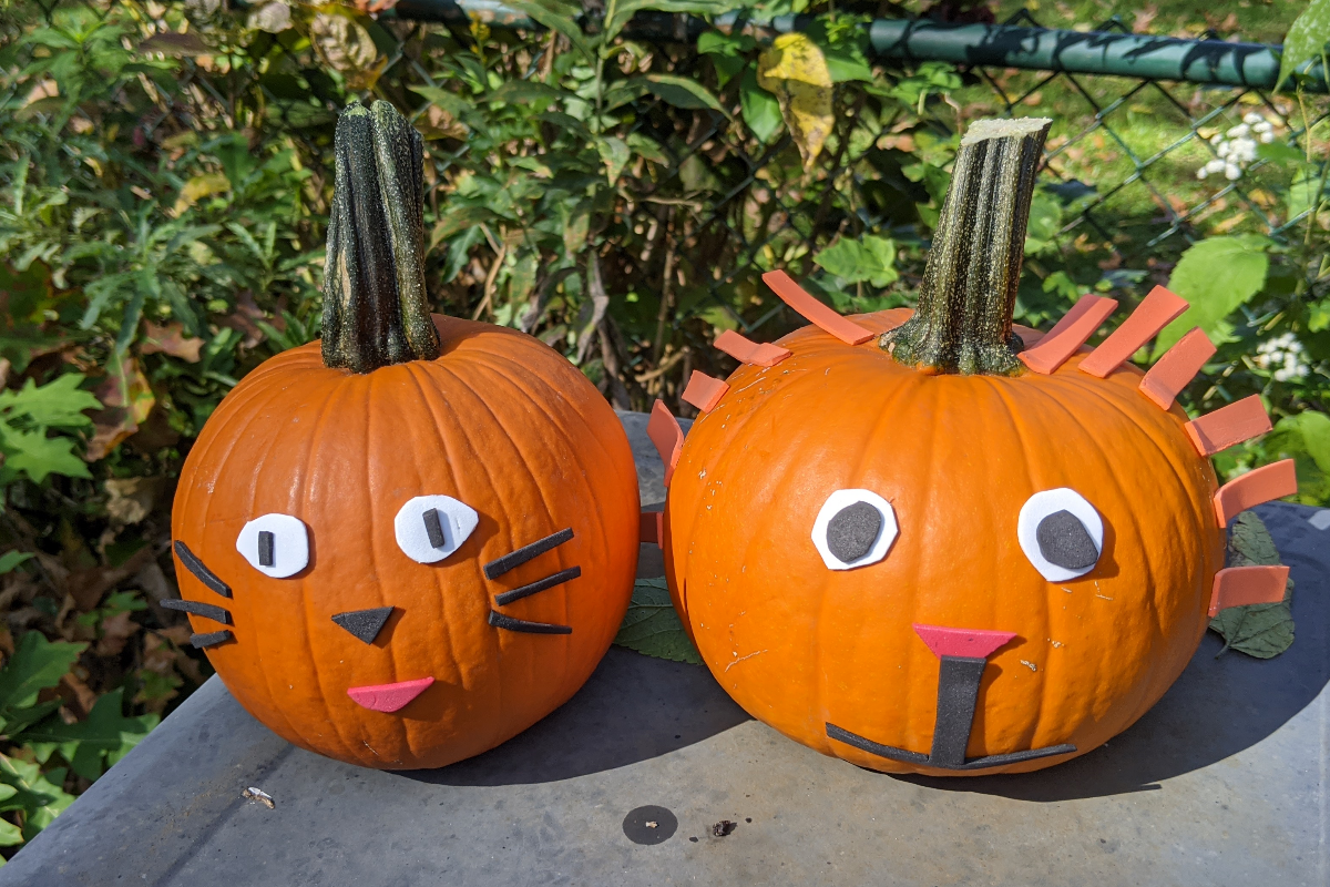 animal pumpkin craft.png